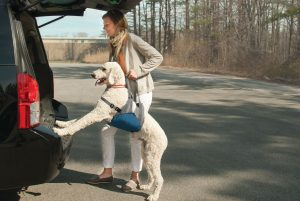 Pet Sling - Kurgo Up & About Dog Lifter