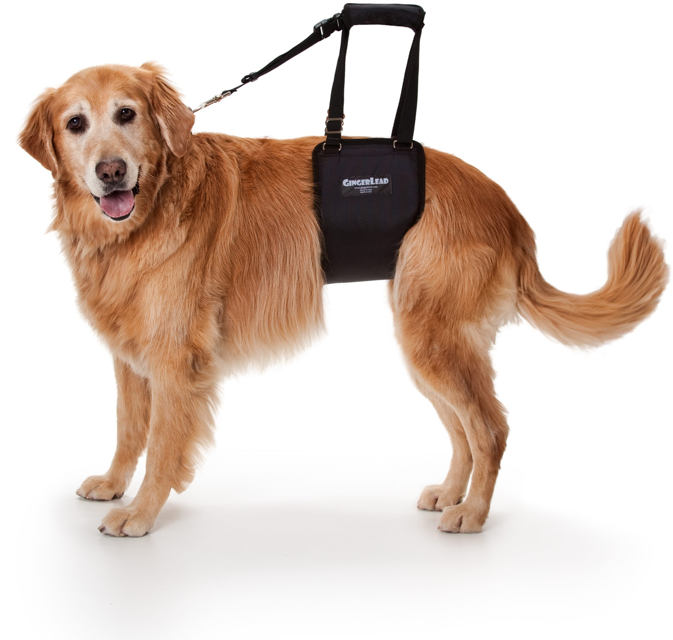 GingerLead Dog Sling Large Female