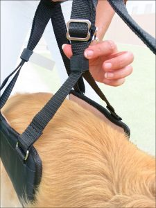 GingerLead Dog Sling Stay-on Straps