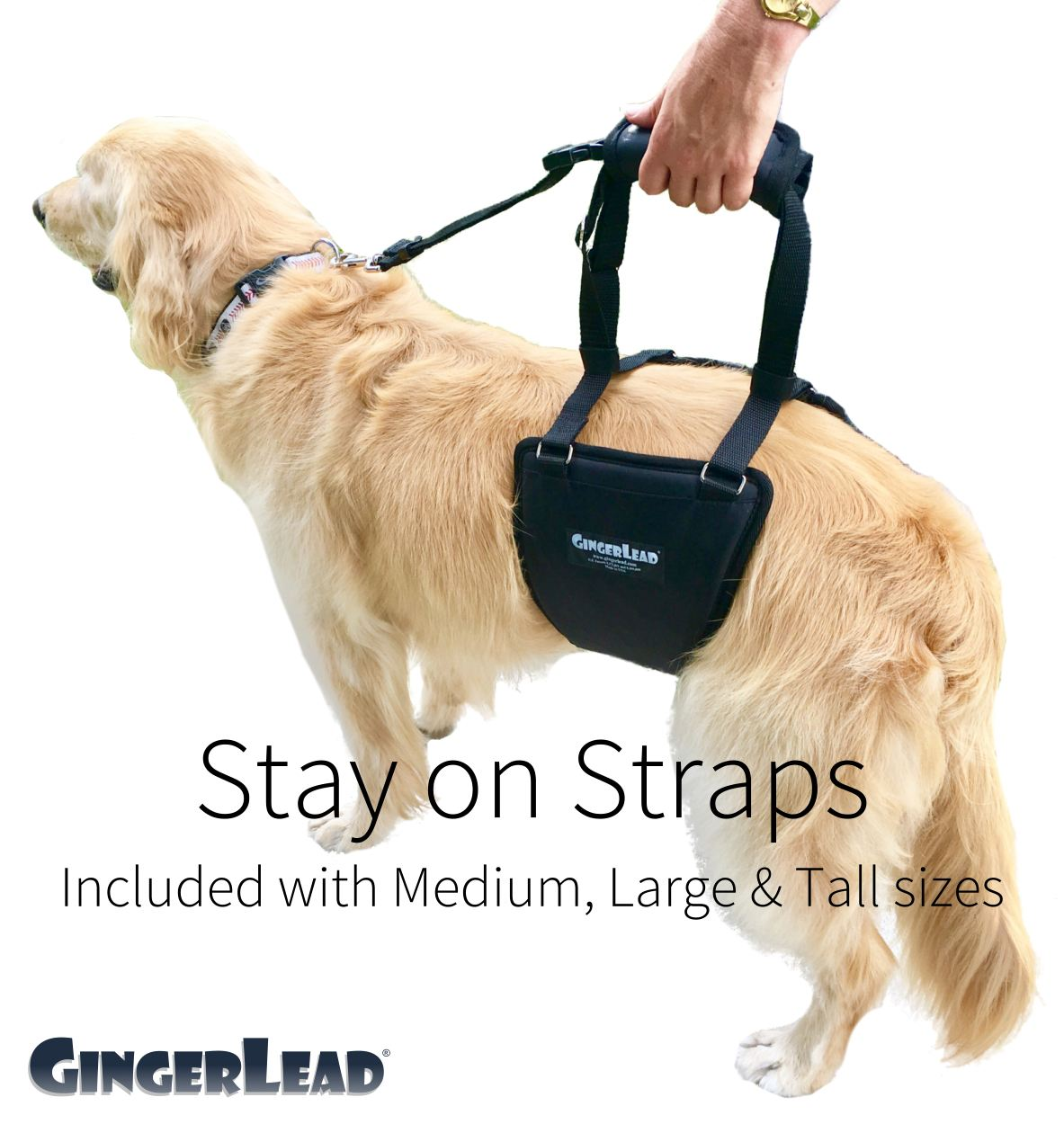 GingerLead with Optional Stay-On Straps for Medium, Large, and Tall Sizes