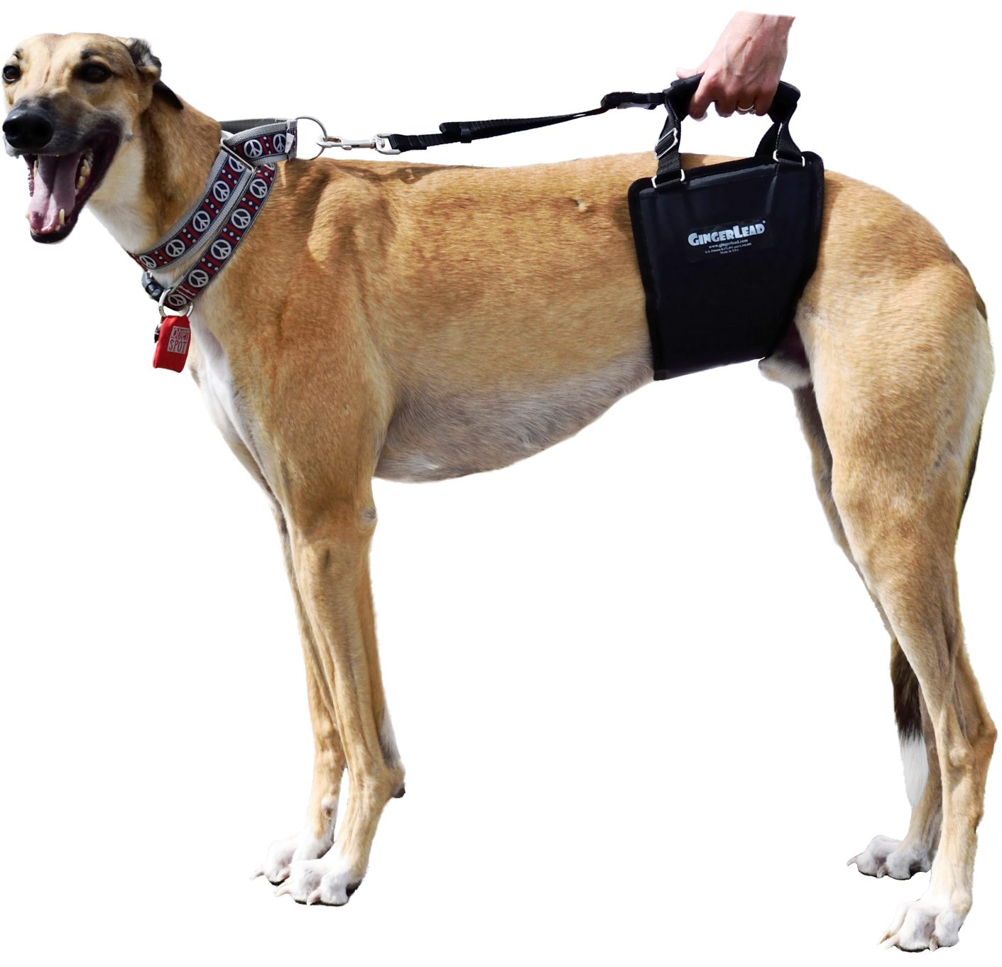 GingerLead Dog Sling, Tall Male2