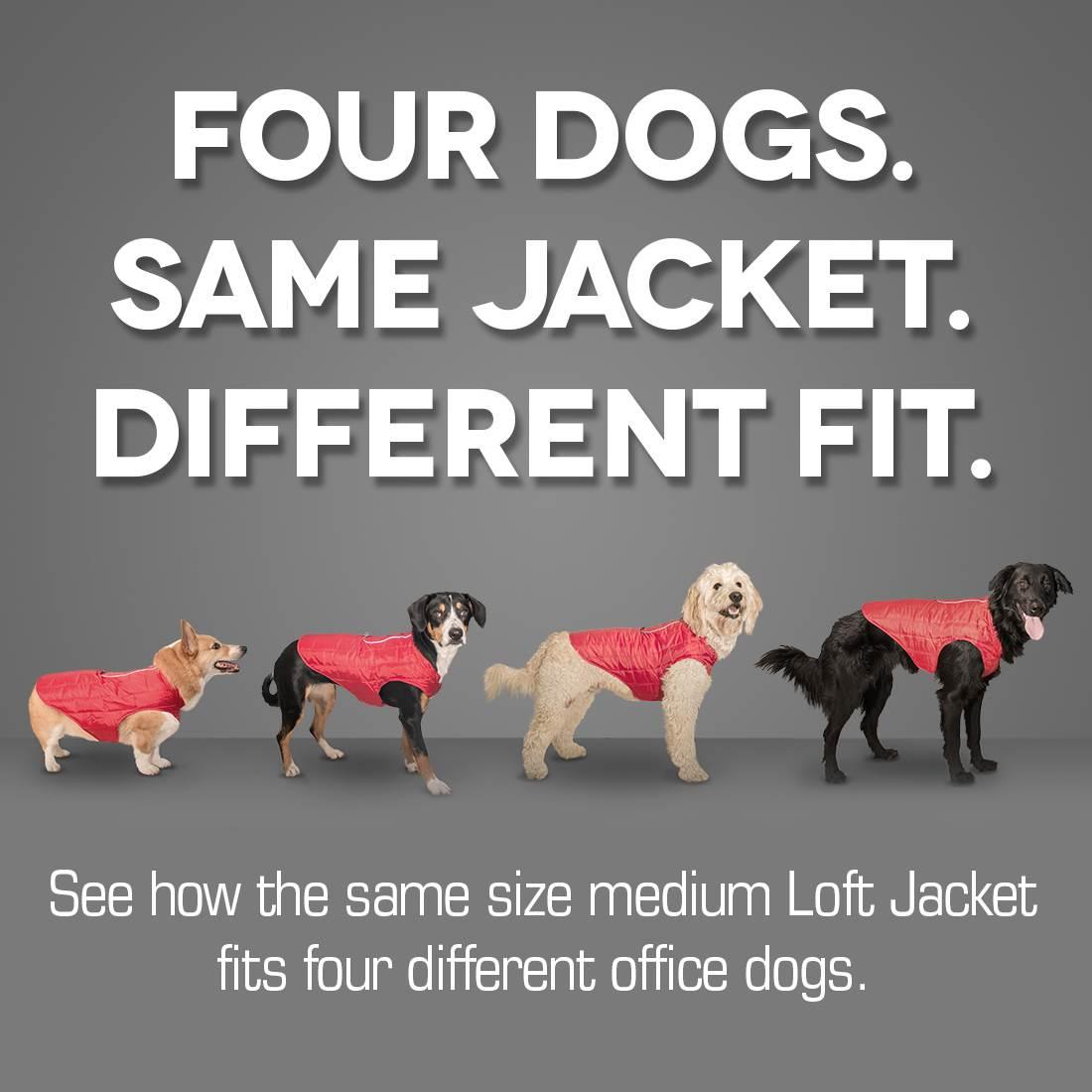 Dog winter coat - Kurgo Loft Dog Coat Fit