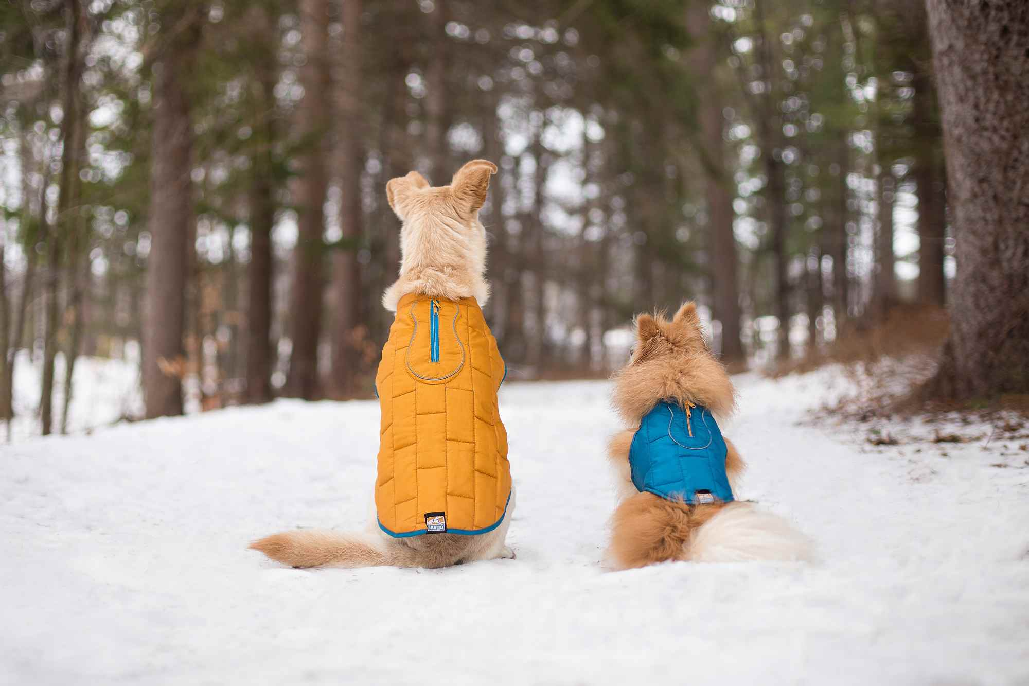 Dog winter coat - Kurgo Loft Dog Jackets are perfect for winter weather