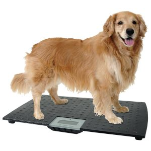 Small Animal Scale - Redmon Large Digital Pet Scale