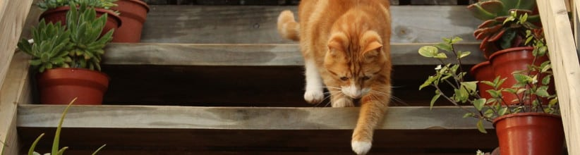 Cat Arthritis Treatment - Cat on Steps